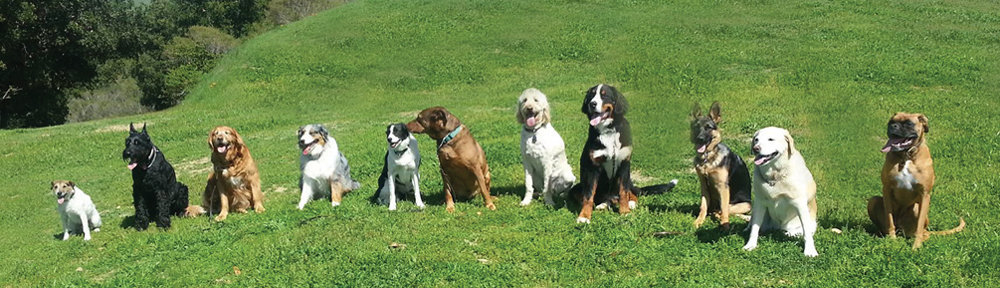 Ellie's Doggie Day Care charges enjoy a day in the East Bay hills