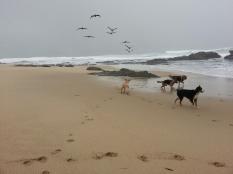 1000_Beach