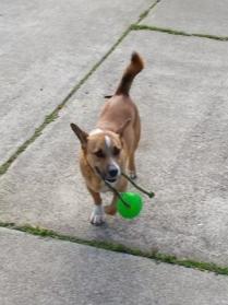 Playing_ball