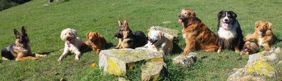 1000_Happy_Dogs