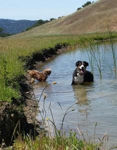 Swim_Pond